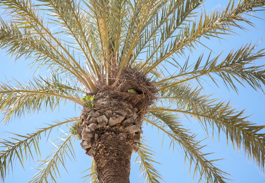 parrot nest in a palm tree
